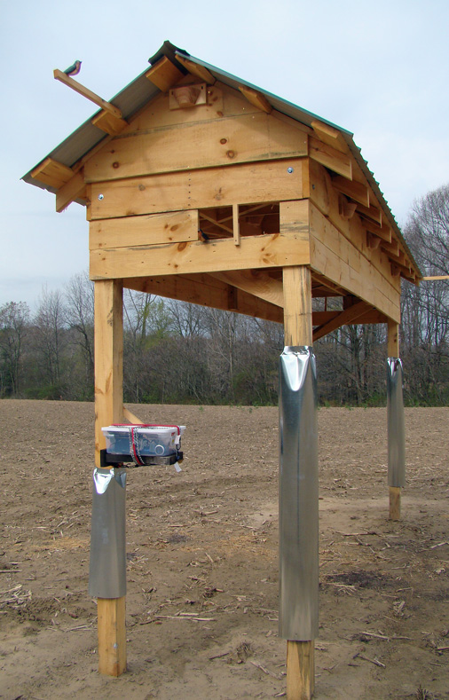 Barn swallows and social cues beco for Building a duck house shelter